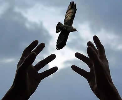 tangan-burung-langit-awan